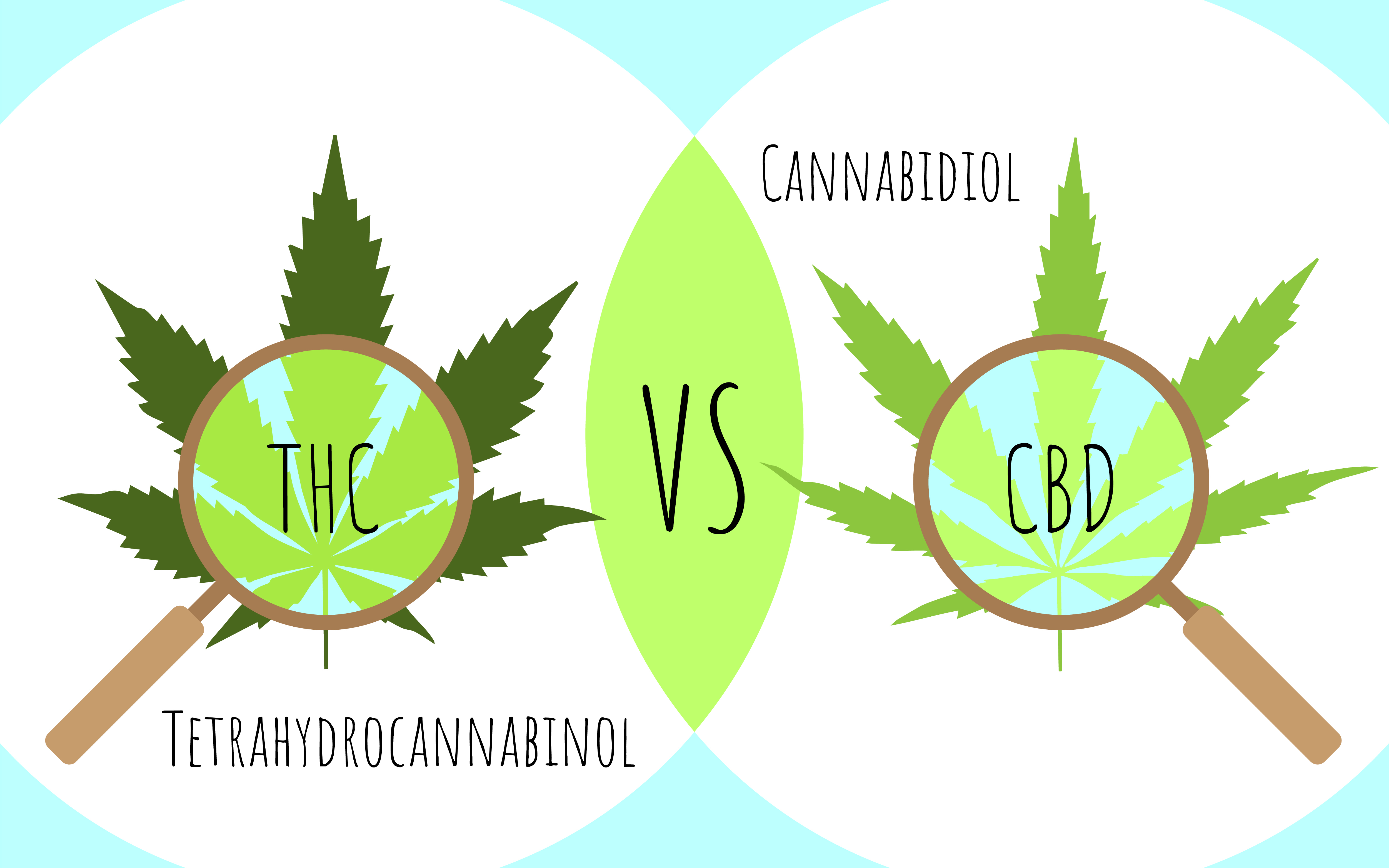 Maine Coast Hemp_THC vs CBD